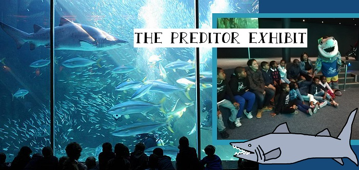 SOS Africa Charity Children Visit The Two Oceans Aquarium in Cape Town